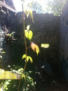 Duncan Mill Ruins (8)