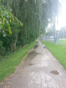 Smythe Park 6