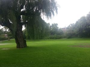 Smythe Park 8