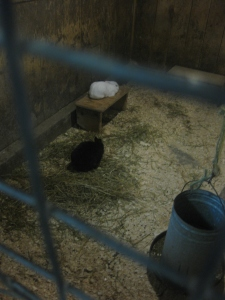 5. Riverdale Farm bunny