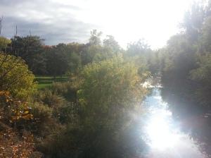 Birkdale Ravine 1