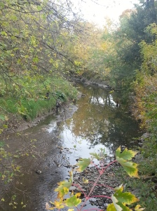 Birkdale Ravine 8
