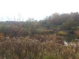 L'Amoreaux North Park 5
