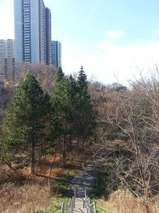 Massey Creek Trail (2)