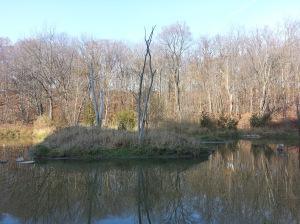 Massey Creek Trail (4)