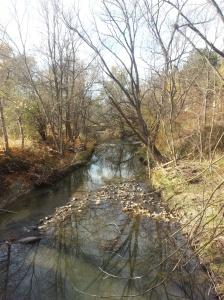 Taylor Creek (1)